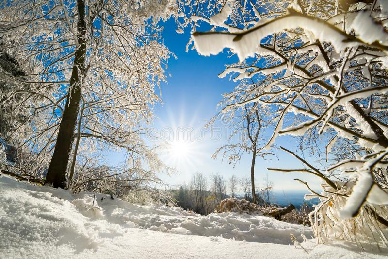 Paisaje soleado del invierno en nieve fotos de archivo libres de regalías