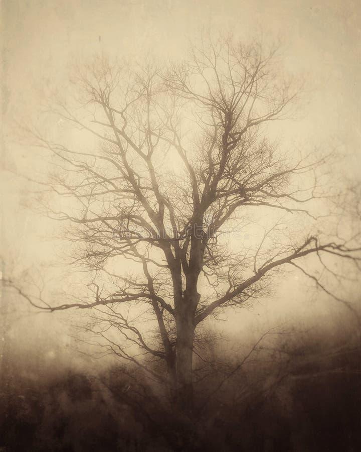 Download Paisaje Solitario Fantasmagórico Del árbol Foto de archivo - Imagen de cubo, solitario: 64205048