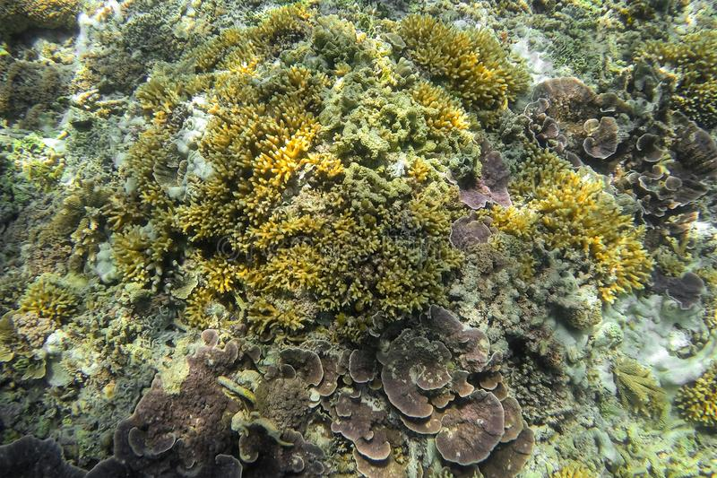 Paisaje subacuático Arrecife de coral en el mar tropical en el meno de Gili Lombok, Indonesia foto de archivo