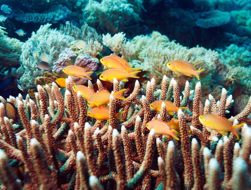 Paisaje subacuático con centenares de pescados imagen de archivo libre de regalías