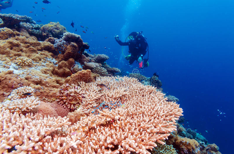Paisaje subacuático con centenares de pescados imágenes de archivo libres de regalías