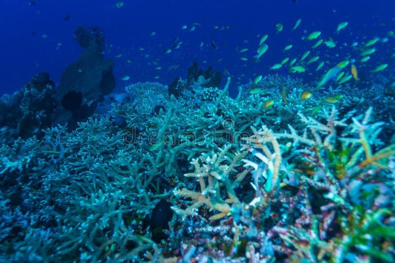 Paisaje subacuático con centenares de pescados fotografía de archivo libre de regalías