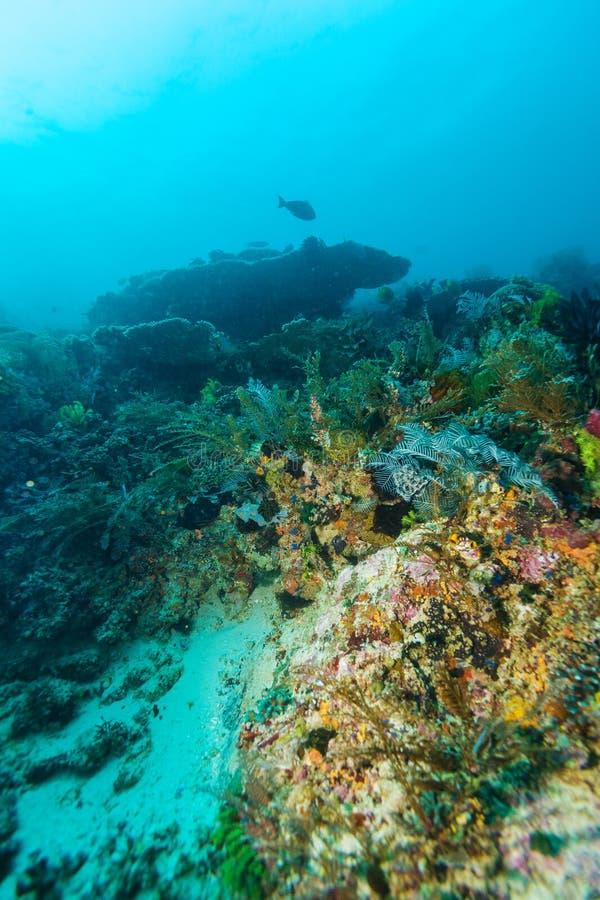 Paisaje subacuático con centenares de pescados fotos de archivo