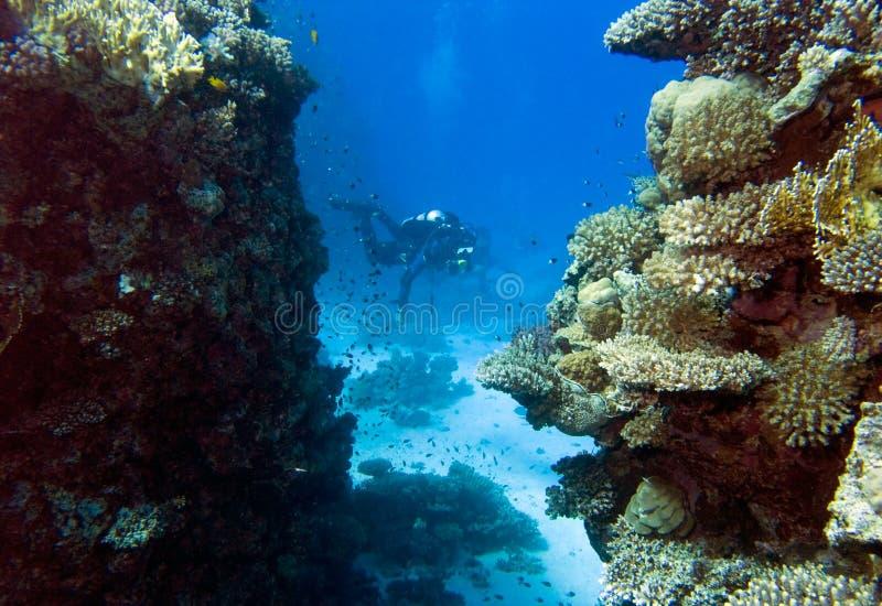 Paisaje subacuático con los zambullidores foto de archivo