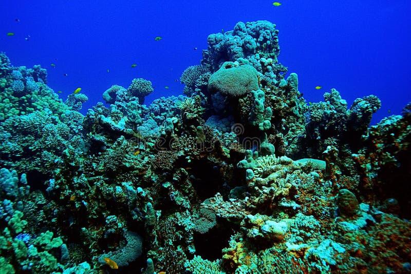 Paisaje subacuático de los buceadores imagen de archivo