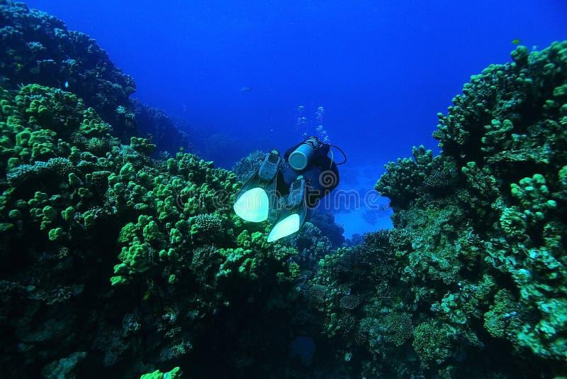 Paisaje subacuático de los buceadores fotografía de archivo libre de regalías