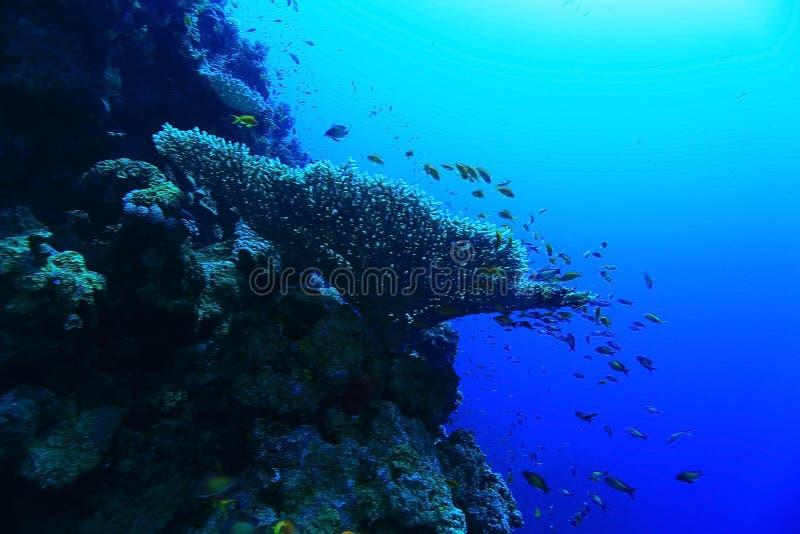 Paisaje subacuático de los buceadores imagenes de archivo