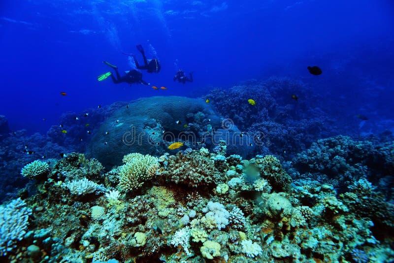 Paisaje subacuático del mar foto de archivo