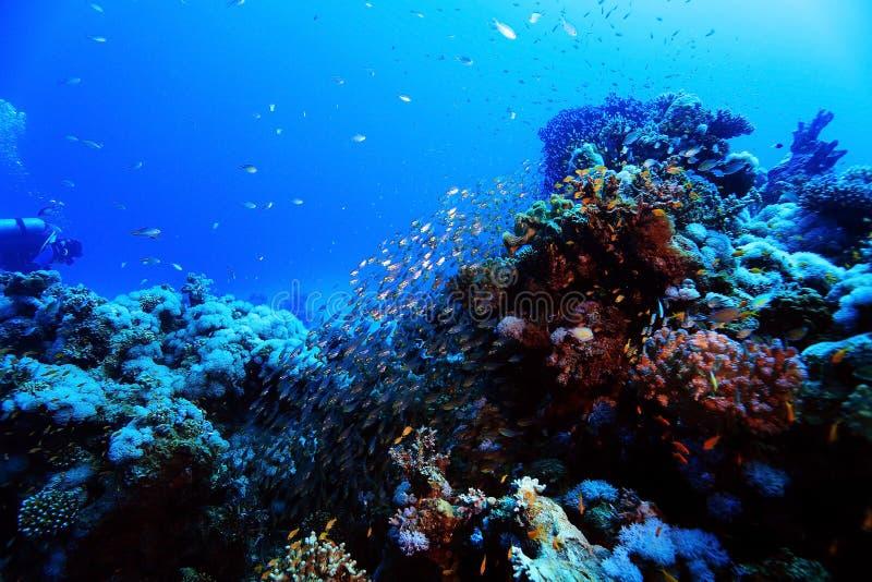 Paisaje subacuático en el mar caliente fotos de archivo