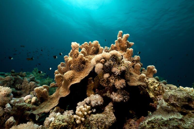 Paisaje subacuático en el Mar Rojo. foto de archivo
