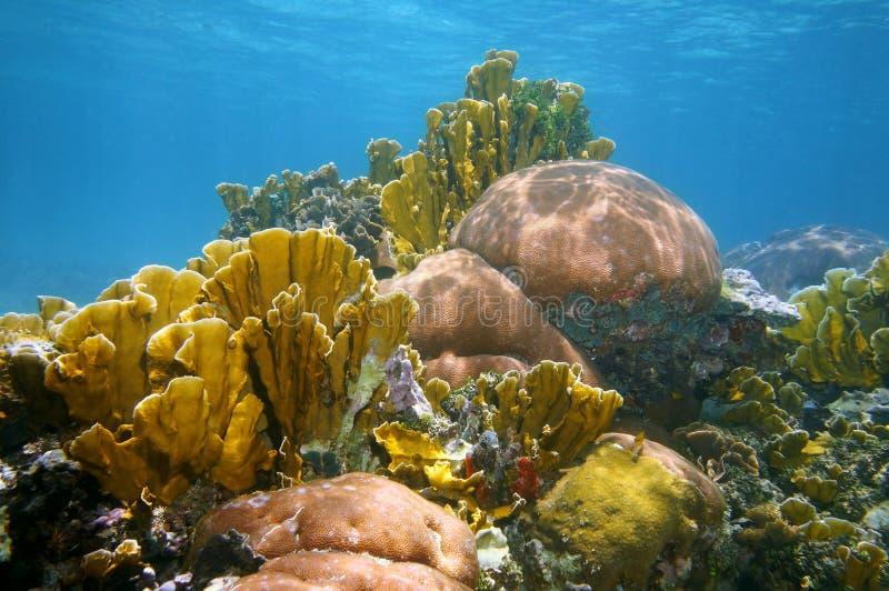 Paisaje subacuático en un arrecife de coral colorido imagenes de archivo
