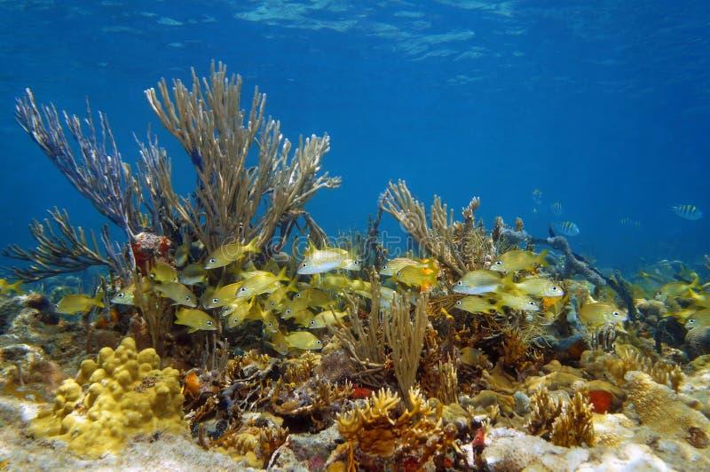 Paisaje subacuático en un arrecife de coral con los pescados foto de archivo