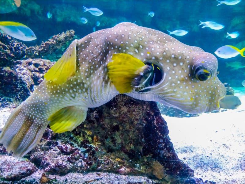 Paisaje subacu?tico con el arrecife de coral y los pescados Los habitantes del acuario del mundo subacu?tico imágenes de archivo libres de regalías