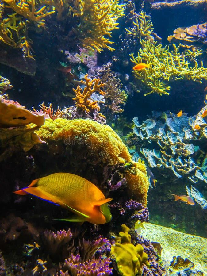 Paisaje subacu?tico con el arrecife de coral y los pescados Los habitantes del acuario del mundo subacu?tico imagen de archivo