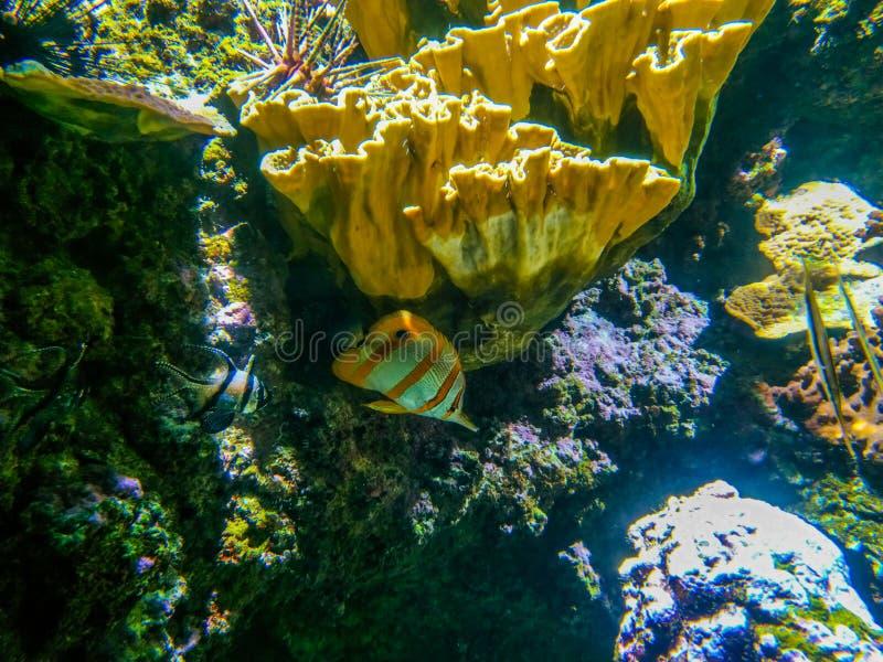 Paisaje subacu?tico con el arrecife de coral y los pescados Los habitantes del acuario del mundo subacu?tico fotos de archivo libres de regalías