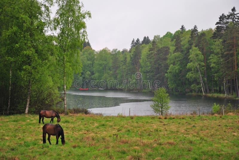 Paisaje Sueco Lluvioso Foto de archivo