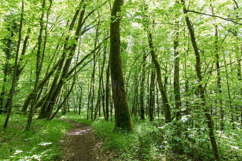 Paisaje suizo del bosque que evoca calma y serenidad fotos de archivo