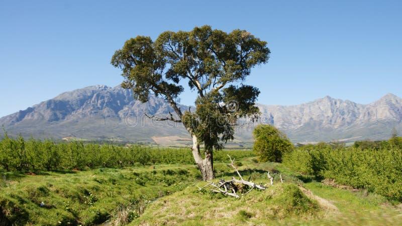 Paisaje Suráfrica imagen de archivo