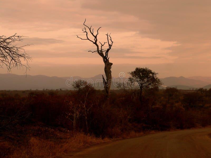Paisaje Suráfrica fotos de archivo libres de regalías