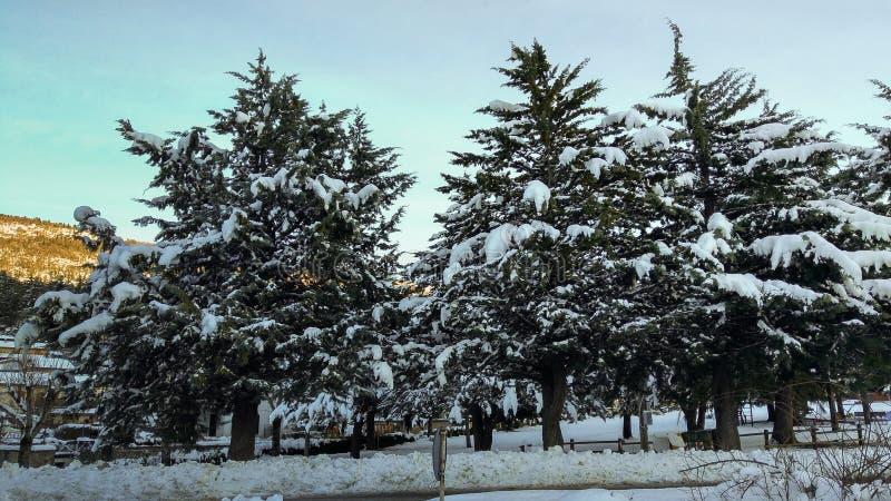 Paisaje típico del invierno con los árboles cubiertos por la nieve foto de archivo