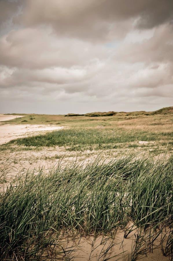 Paisaje típico en Jutlandia, Dinamarca fotografía de archivo