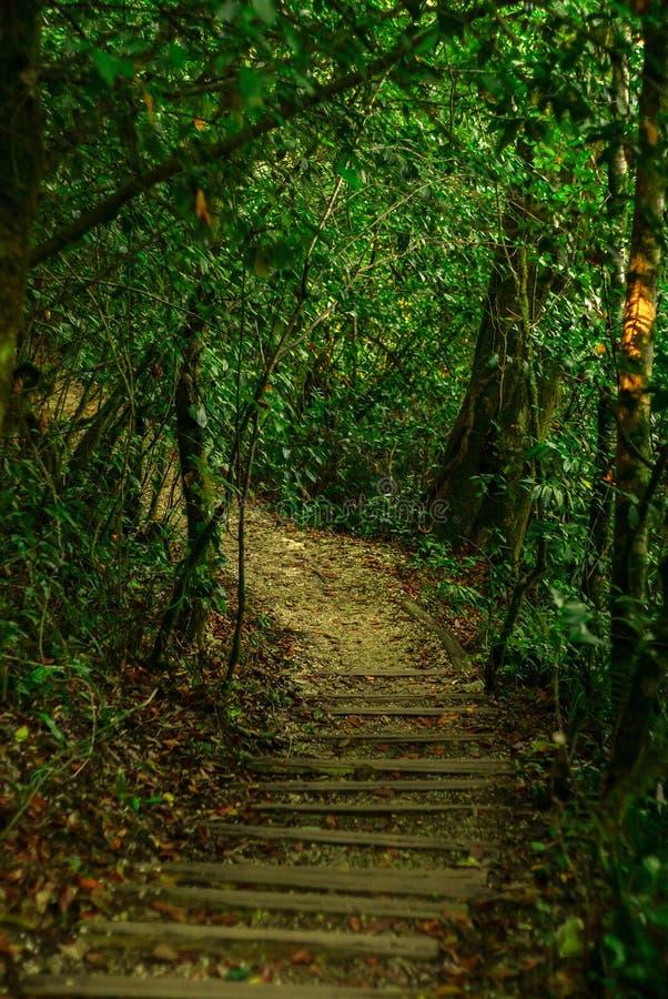 Paisaje - trayectoria a través del bosque verde fotografía de archivo libre de regalías