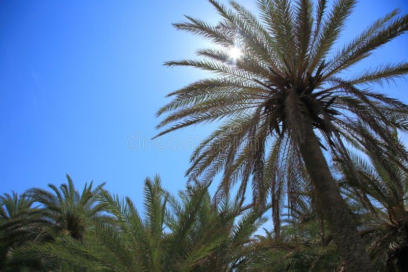 Download Paisaje tropical foto de archivo. Imagen de playa, palma - 41907458