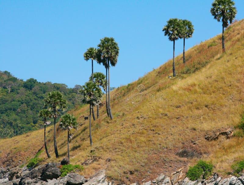 Paisaje tropical imágenes de archivo libres de regalías