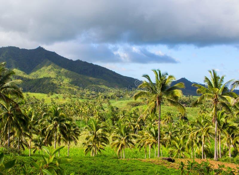 Paisaje tropical con la palmera y la montaña Opinión de cielo azul con las palmeras de los Cocos imagen de archivo libre de regalías