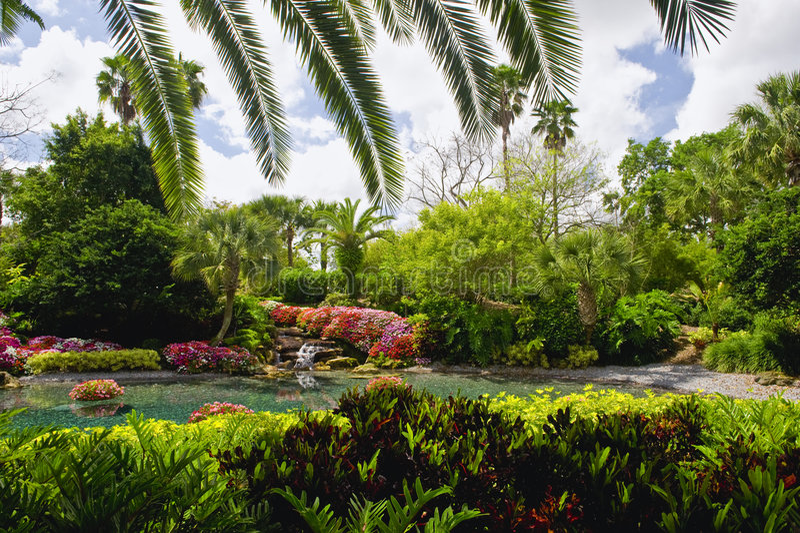 Paisaje tropical del jardín imagen de archivo libre de regalías