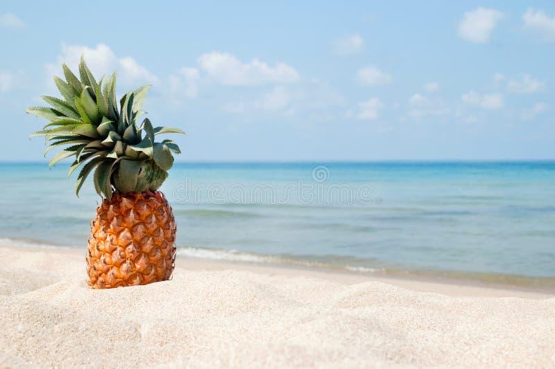 Paisaje tropical del verano con la piña en la playa blanca de la arena en el fondo del mar azul foto de archivo