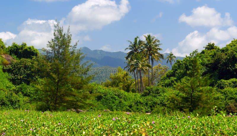 Paisaje tropical en Goa del sur imagenes de archivo