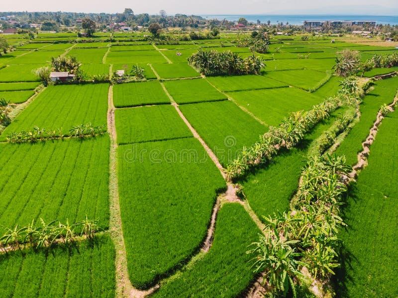 Paisaje tropical en la isla de Bali Vista aérea de los campos verdes del arroz foto de archivo libre de regalías