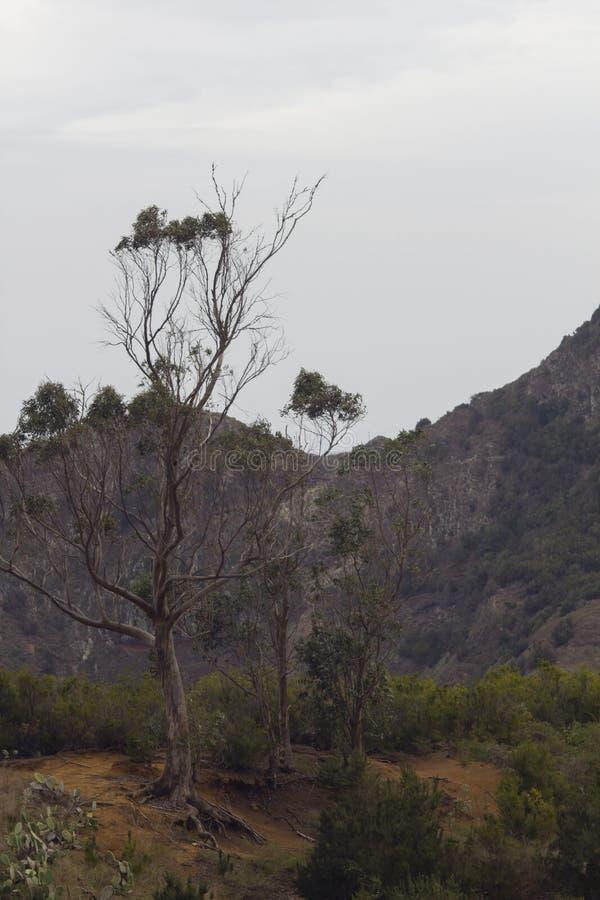 Paisaje tropical rústico El árbol solo crece encima de la montaña imágenes de archivo libres de regalías