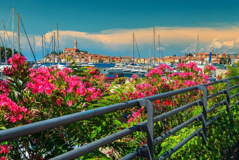 Paisaje urbano asombroso con la ciudad vieja de Rovinj, región de Istria, Croacia, Europa fotos de archivo