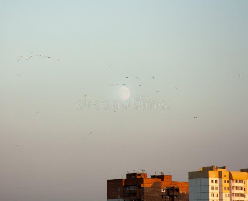 Paisaje urbano minimalista con el cielo azul, la luna blanca y los rascacielos urbanos de las casas de estancia Puesta del sol de foto de archivo