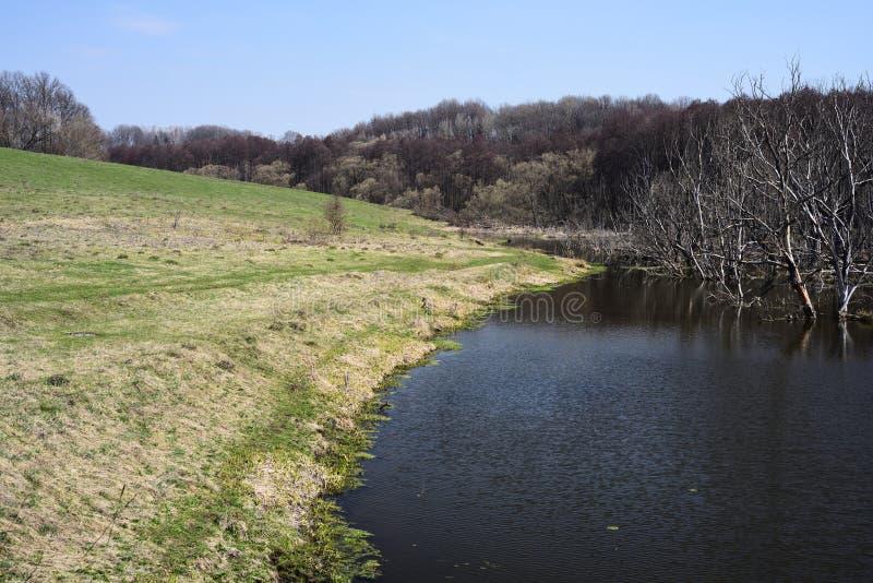 Paisaje vacío del campo Pequeña orilla del río y árboles secos en agua en día de primavera soleado fotos de archivo libres de regalías