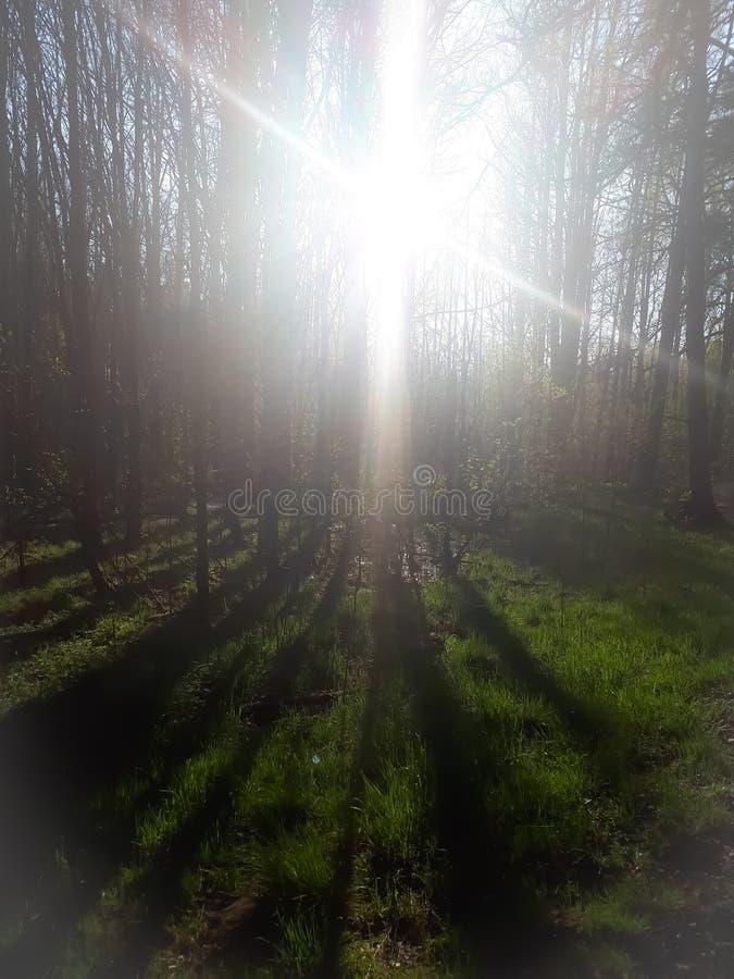 Paisaje, verde, bosque, hierba, foto de archivo