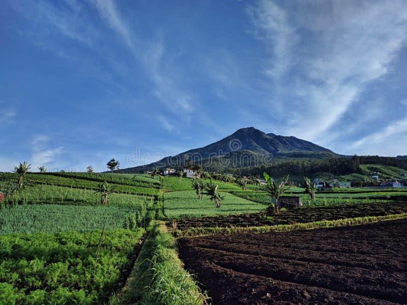 Paisaje verde de la montaña del césped, Solo Indonesia fotos de archivo libres de regalías