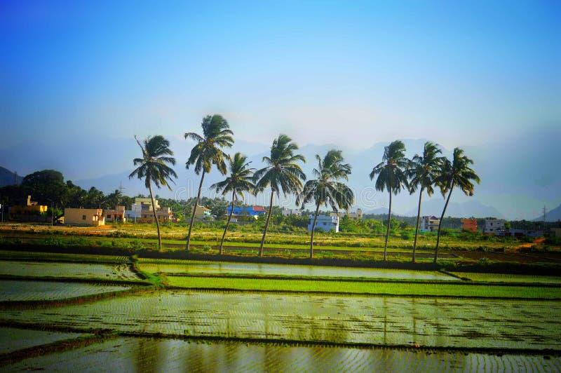 Paisaje verde de la naturaleza con el cielo azul fotos de archivo