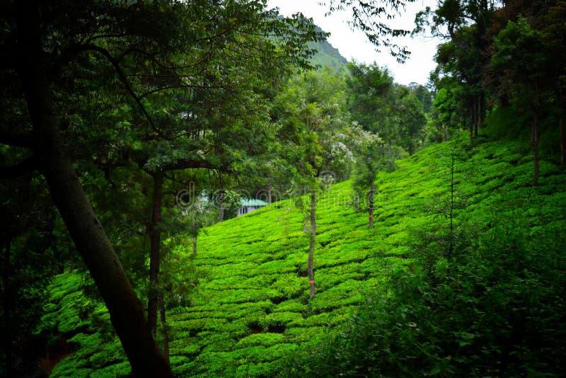 Paisaje verde de la naturaleza con el cielo azul foto de archivo