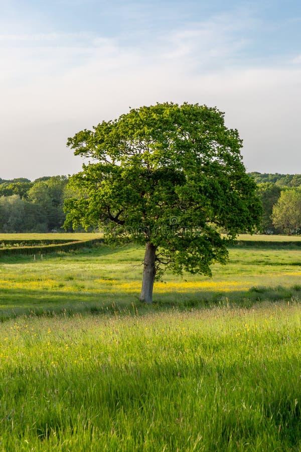 Paisaje verde de Sussex imagen de archivo libre de regalías