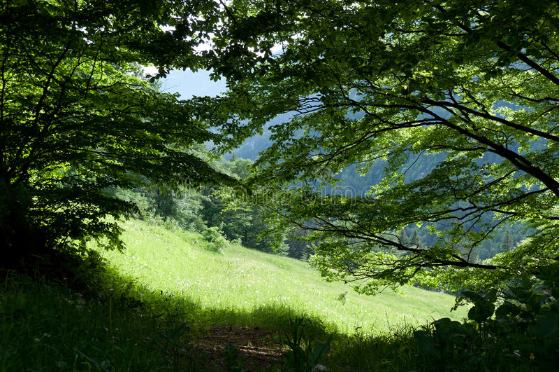 Paisaje verde del bosque foto de archivo