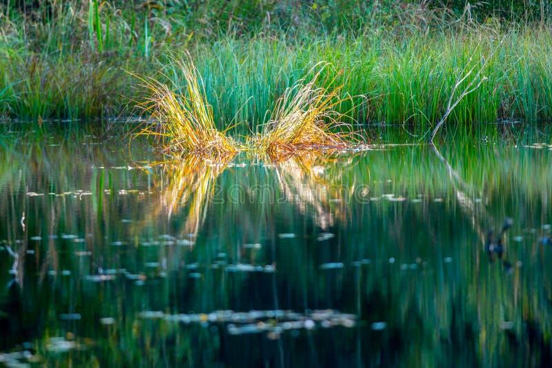 Paisaje verde del pantano fotos de archivo libres de regalías