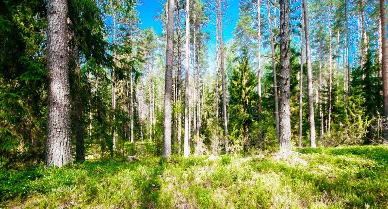 Paisaje verde del verano fotos de archivo