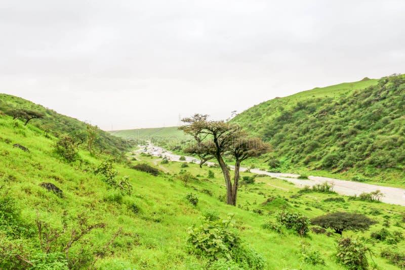 Paisaje verde enorme, árboles y montañas de niebla en el centro turístico de Ayn Khor, Salalah, Omán foto de archivo libre de regalías