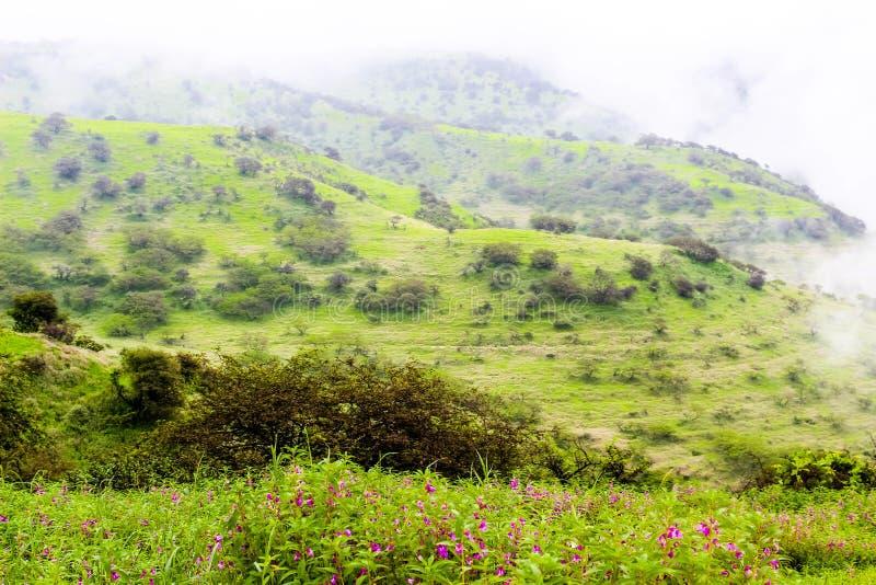 Paisaje verde enorme, ?rboles y monta?as de niebla en el centro tur?stico de Ayn Khor, Salalah, Om?n imágenes de archivo libres de regalías