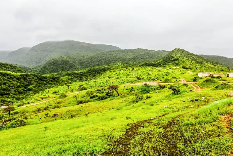 Paisaje verde enorme, ?rboles y monta?as de niebla en el centro tur?stico de Ayn Khor, Salalah, Om?n fotos de archivo