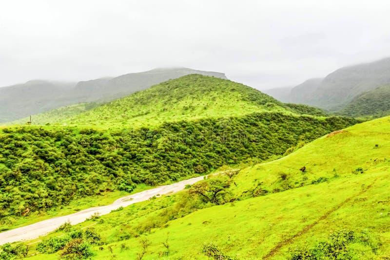 Paisaje verde enorme, ?rboles y monta?as de niebla en el centro tur?stico de Ayn Khor, Salalah, Om?n imagen de archivo