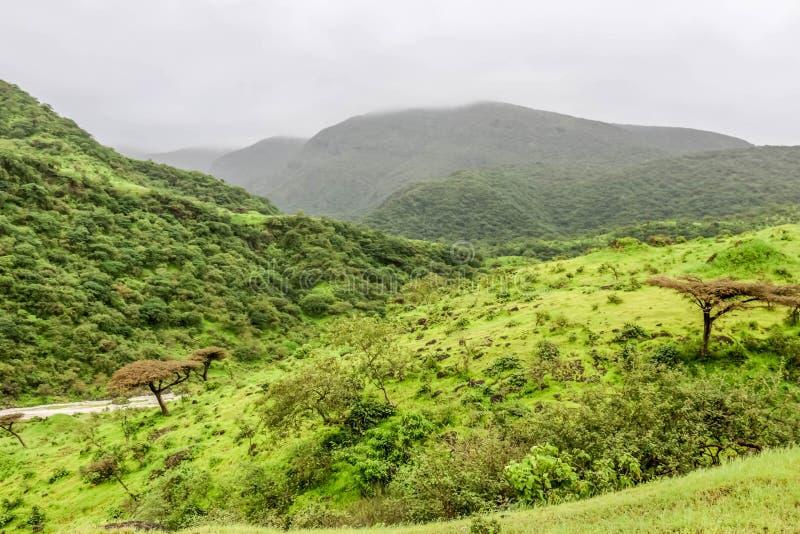 Paisaje verde enorme, ?rboles y monta?as de niebla en el centro tur?stico de Ayn Khor, Salalah, Om?n foto de archivo